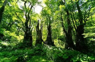 天生県立自然公園