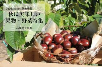 秋においしい果物・野菜
