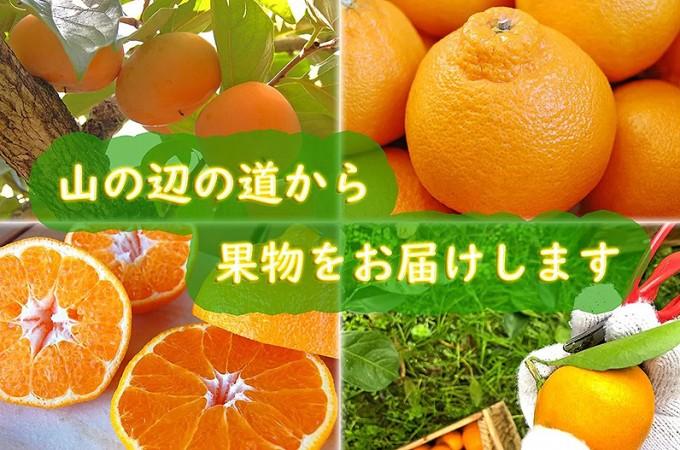 実りの秋!食欲の秋!果物特集
