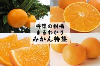 杵築の柑橘まるわかり!みかん特集!