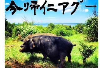 日本で唯一現存している非常に希少な純系在来豚です。ふわっとほぐれる脂身と、圧倒的な旨味の肉は絶品。まさに食の世界遺産です。