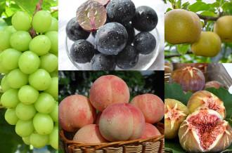 と~っても美味しい、おすすめの朝採りフルーツを紹介