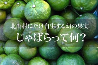 北山村でしか栽培されていない果実「じゃばら」