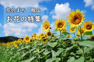 お花の特集