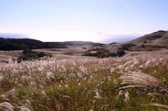 稲取細野高原 10/14~すすきイベントが始まります。