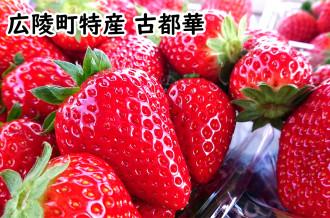 奈良県のブランドいちごとして有名な「古都華」のご紹介です