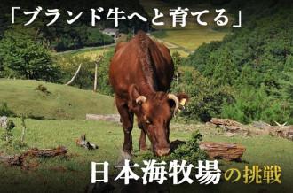 京丹後市 ふるさと納税特集ページ 京たんくろ和牛