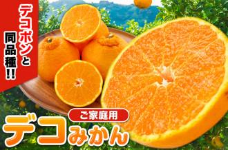 あの柑橘の王様『デコポン』と同品種!! ご家庭用デコみかん(不知火)