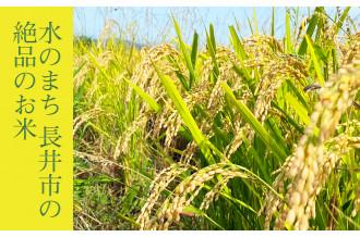 水のまち 長井市の絶品のお米