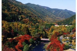 お待たせいたしました!!秋の味覚の王様!松茸の特集ページです。本物の松茸の味と香りを辰野町からお届けします!!