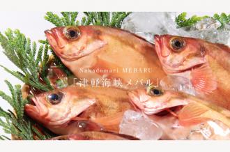 中泊町のメバル「津軽海峡メバル」