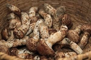 国内一級品と呼び声高い豊丘村産松茸