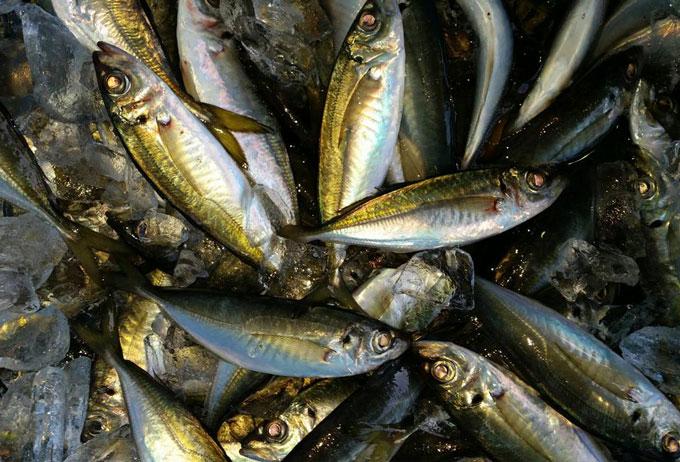 黒潮が育んだ、とれたて鮮魚をお届けします!!