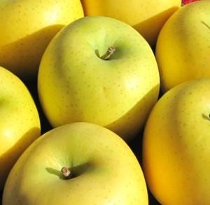 信州が誇る黄色いりんご「シナノゴールド」