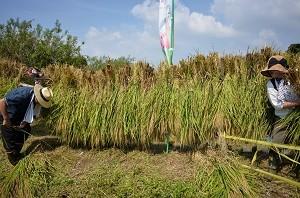 今年も稲刈りまで大切に育てています。