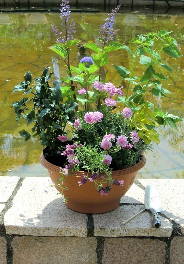 「モネの庭」季節の寄せ鉢  【北川村モネの庭マルモッタン】