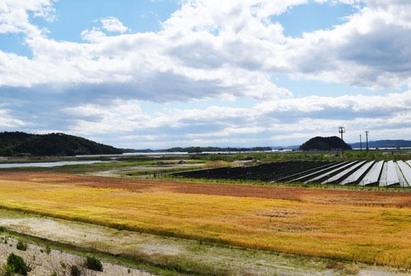 希望の大麦プロジェクト