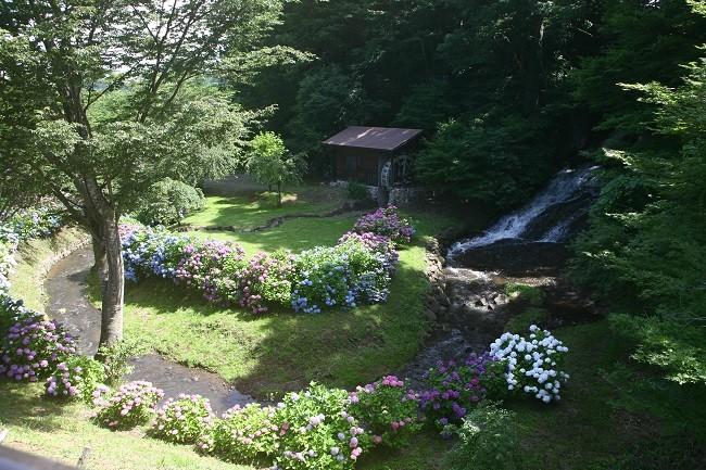 産直付近にある親水公園「お滝さん」6月は紫陽花がきれいでした!