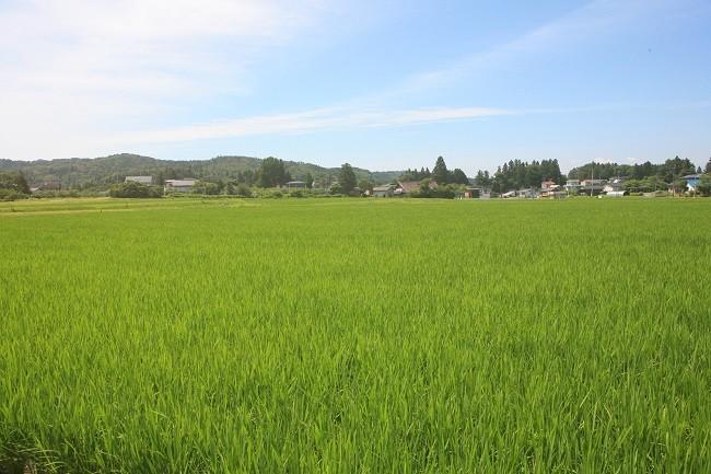 産直裏の田園風景