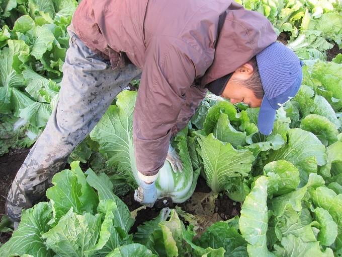 農家さんの自慢の野菜たち