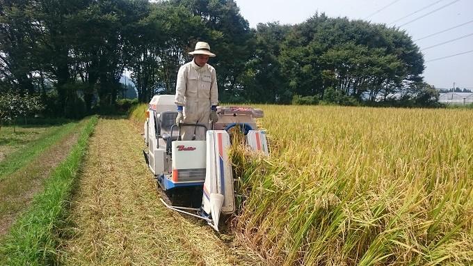 28年産お米収穫風景。猛暑を乗り越えたお米は美味しく育ちました。