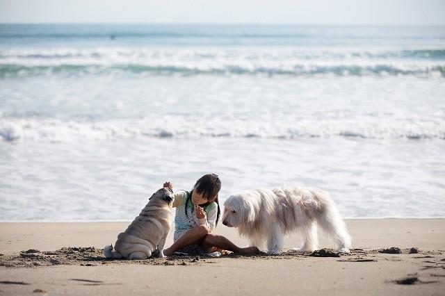 砂浜でワンライフのおやつをはんぶんこして食べる我が子と犬たち