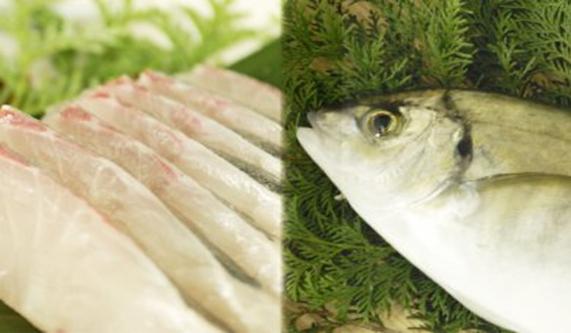 【幻の高級魚】縞鯵(シマアジ)お刺身セット