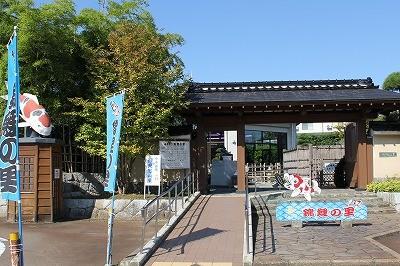 小千谷市の観光施設「錦鯉の里」
