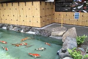 市役所にも「市の魚」錦鯉の鑑賞池があります