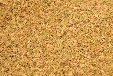 おいしいお米を長く楽しんでほしいから籾貯蔵