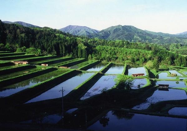 拓けた土地の大面積のものが多く。天気の良い日は青空が水田に映ります