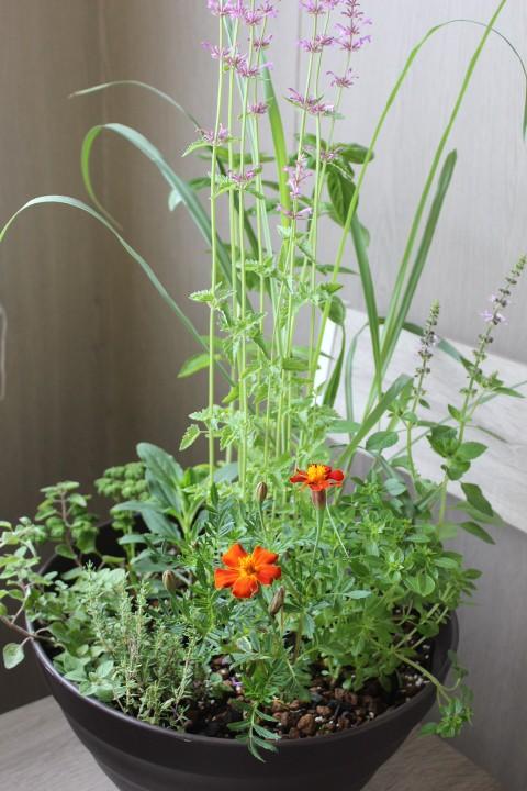 モネの庭ハーブの寄せ植え(一例)