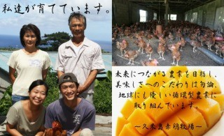 久米島赤鶏牧場について