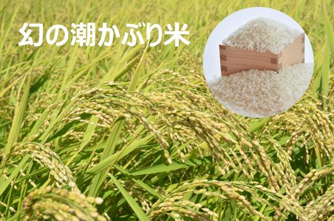 幻の潮かぶり米
