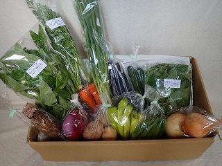 9月の有機野菜セットの例