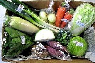 11月の有機野菜セットの例