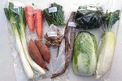 1月の有機野菜セットの例