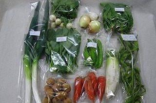 10月の有機野菜セットの例