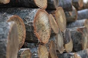 黒炭の良質な原材料「ならの木」