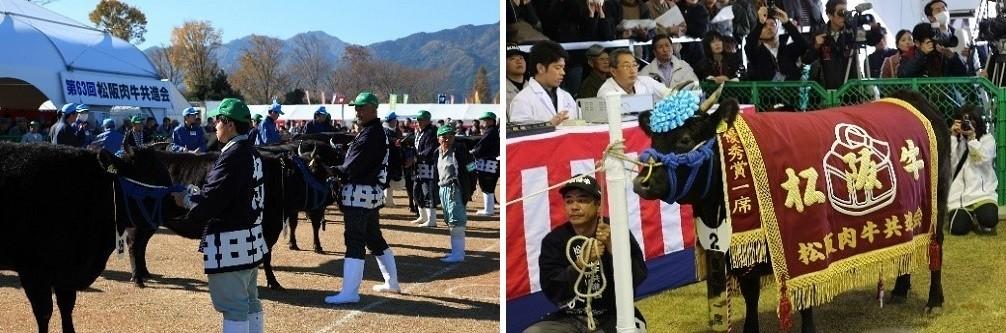 松阪肉牛共進会(松阪牛まつり)の様子
