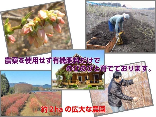 広い農園とこだわりの栽培