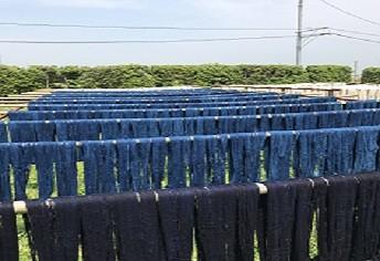 藍染した糸を天日干しし染め上げていく
