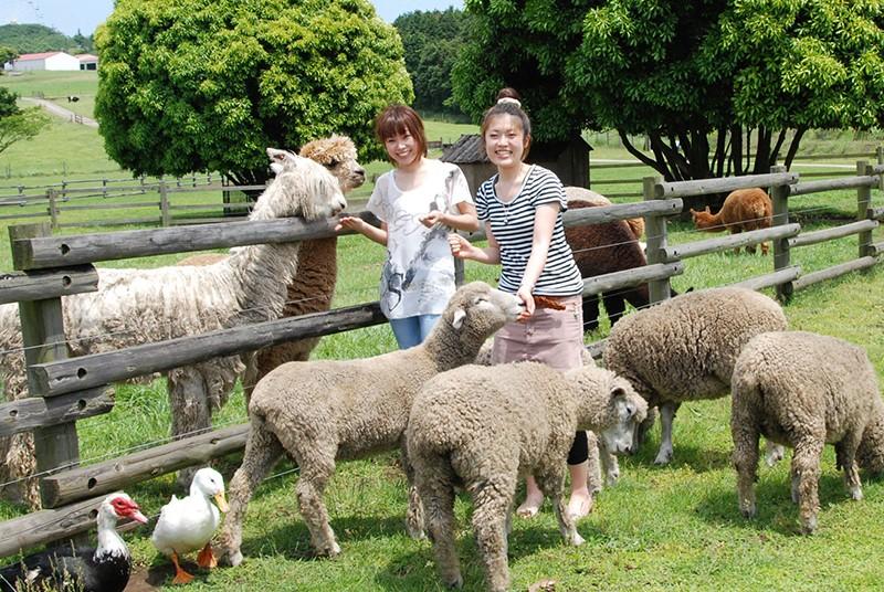 子供から大人まで楽しめるマザー牧場