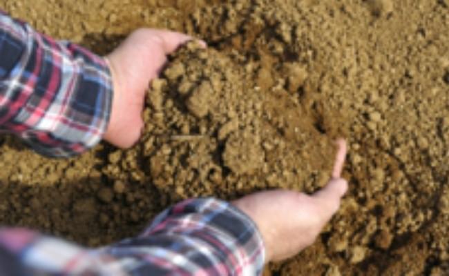 西山台地は水はけのよい赤土で、お芋栽培に相性ばっちりです。