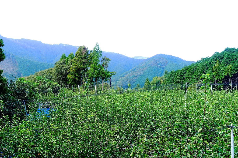 標高の高さと、抜群の水はけが梨を大きくおいしく育てる
