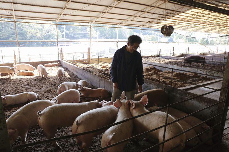 広い豚舎でゆったりと、そして愛情をもって大切に育てられています