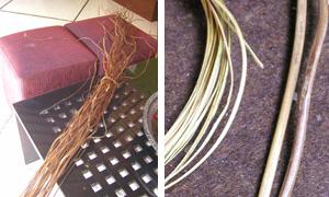 これがアタの茎部分です