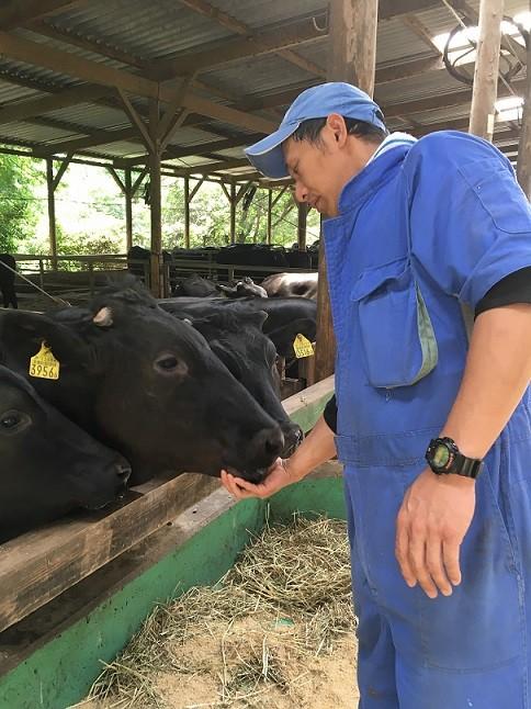 主人公の牛たち