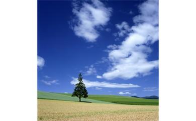 ③丘の夏模様