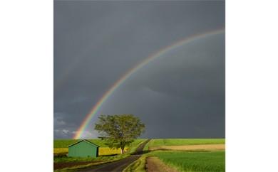 ⑥道の上に架かる虹